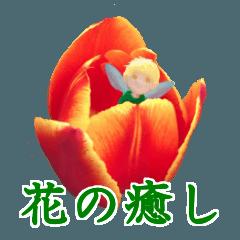 『花の癒し』妖精と