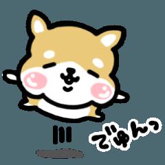 しあわしぇ顔の柴犬