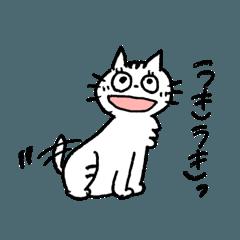 ネコのちぃちゃん1