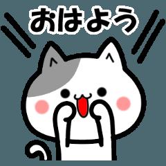 [LINEスタンプ] 無難なネコちゃん!