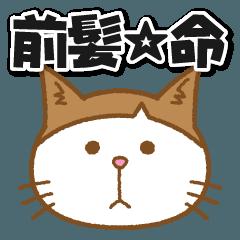 [LINEスタンプ] 前髪猫さん