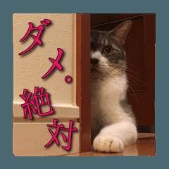 【ねこ】うしお&モーモー